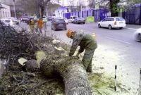 Спиливание,кронирование,фитосанитарн/аварийная подрезки,валка деревьв - фото 1