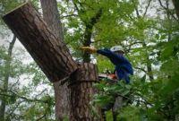 Спиливание,кронирование,фитосанитарн/аварийная подрезки,валка деревьв - фото 3