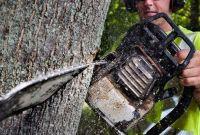 Спиливание,кронирование,фитосанитарн/аварийная подрезки,валка деревьв - фото 4