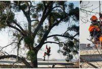 Спил аварийных деревьев в Харькове - фото 1