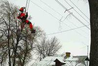 Спил аварийных деревьев в Харькове - фото 2