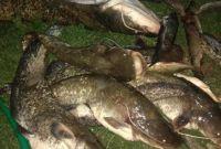 Приборы для ловли рыбы Samus 1000, Rich P 2000, Rich AC 5m - фото 3